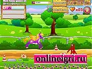 Пони гонки