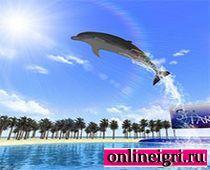 Водное шоу дельфинов