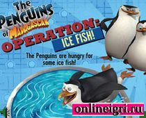 Мадагаскар: накорми пингвина